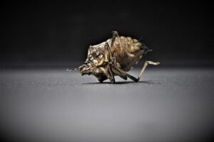 Tips to prevent bed bugs