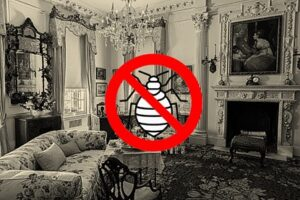 Disappearance of bed bugs in the 20th century